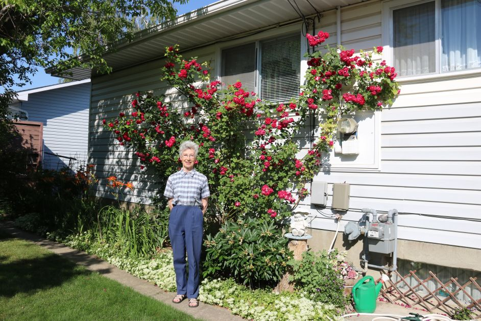 Bertha Krause and her roses