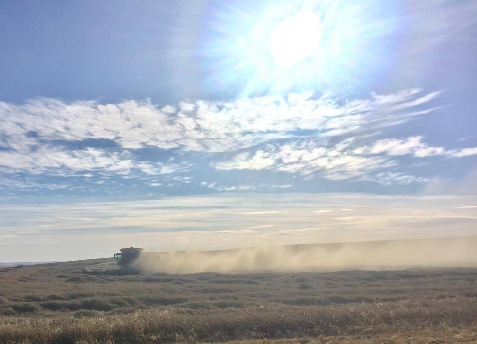 fall harvest resumes with small window of warm weather