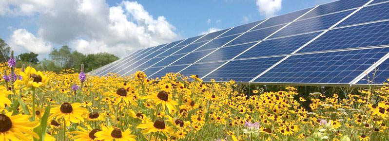 solar farm with black eyed susan e1507092014555